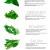 Guía de hierbas para cocinar. Infografía